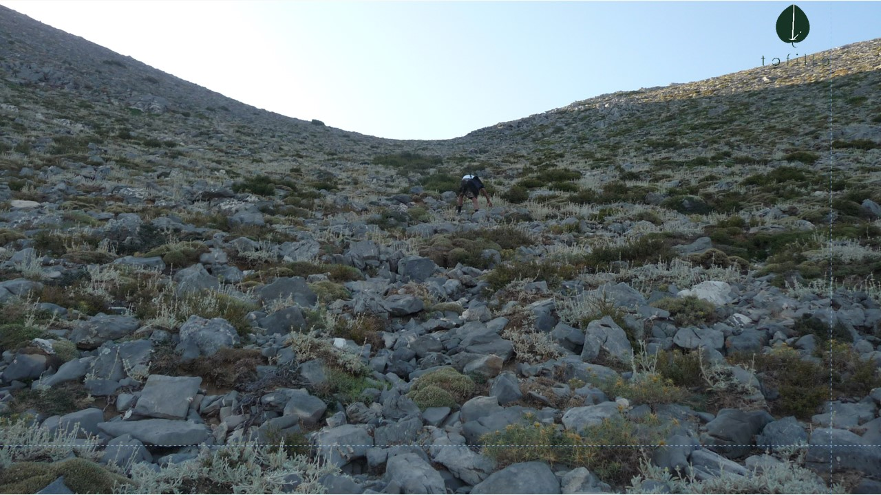 We collected seeds from the white mountains to produce medical plants of malotira.